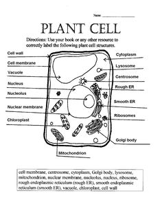 Plant Cell Worksheets - Khayav