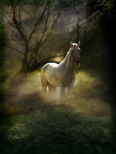 Beautiful White Horse In The Mist
