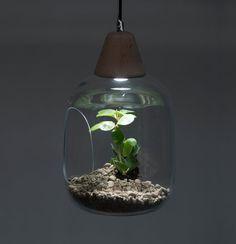 Pendant glass terrarium // Milo // lighting // by AgaJanukanisShop