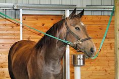 At many barns, crosstying is common practice. Teach your horse to stand quietly in crossties with these five easy steps.