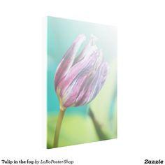 Tulip in the fog gespannter galeriedruck