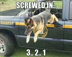 Police K9 Cops