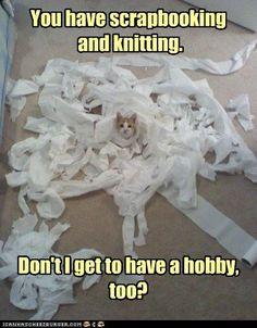 Kitties have hobbies too.