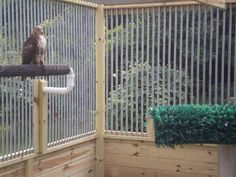 """Everyone knows how hard figuring out what a mews and weathering """"should"""" look like. Here are pictures of Member's Mews and Weatherings, please feel free to add pictures of your own! Raptor Center, Pond Animals, Bird House Kits, Bird Aviary, Sport Of Kings, Peregrine, Birds Of Prey, Bird Species, Pet Birds"""