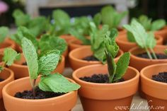 Chocolate Oreo Pudding Pots: You read right. No this is not a gardening tip it's layers of Pound Cake, Pudding, Oreo Cookie Crumbs and a sprig of Mint. How cute are these for a back yard party?