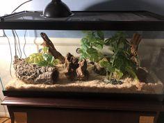 Leopard Gecko Terrarium, Snake Terrarium, Leopard Gecko Setup, Rosy Boa, Snake Cages, Snake Enclosure, Corn Snake, Pet Snake, Ball Python
