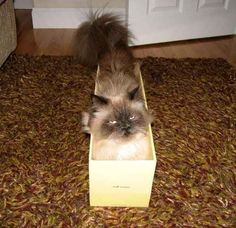 Whatever it is you're into, you should find someone who makes you feel comfortable being who you are, no matter what. | The Search For Love, As Told By Cats In Boxes