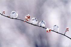 Adorable winter birds.  Matthew 6:26