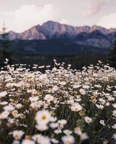 natur aesthetic Remembering you Tumblr Photography, Nature Photography, Beautiful World, Beautiful Places, Nature Aesthetic, Adventure Is Out There, Belle Photo, Aesthetic Wallpapers, Pretty Pictures