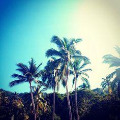 luxurious tropical beach house - Google Search