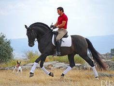 Dressage, Dangerous Sports, Man On Horse, Horse Photos, Run Around, Horseback Riding, Equestrian, Horses, Baroque