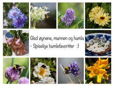 Lavendel - slik steller du den for maks blomstring - Moseplassen Grow Your Own, Planting, Rose, Garden, Jewelry, Veggies, Kitchen, Flowers, Compost