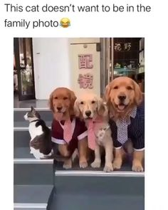 Funny Animal Jokes, Funny Dog Memes, Funny Dog Videos, Funny Animal Pictures, Animal Memes, Dog Pictures, Cute Funny Dogs, Cute Funny Animals, Funny Puppies