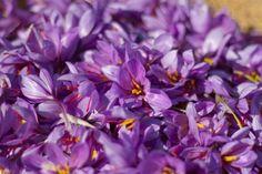 La flor de azafrán en los cestos.