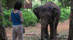 Elefanten-Tourismus setzt Gewalt voraus   Elefantenreiten ist immer noch eine beliebte Attraktion auf vielen Rundreisen in Asien - aber trotzdem meist reine Quälerei, weil die Tiere in der Regel mit Gewalt gefügig gemacht werden.