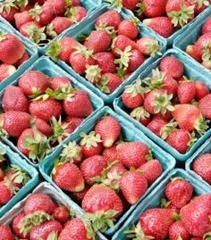 Where to Pick Your Own Berries in Maryland and Virginia