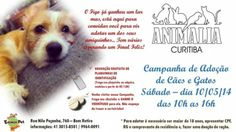 PEDRO HITOMI OSERA: Animalia Curitiba promove campanha de adoção de pe...