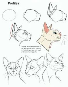 Animal Sketches, Animal Drawings, Art Drawings, Cat Reference, Drawing Reference Poses, Illustration Art Drawing, Drawing Sketches, Cat Drawing Tutorial, Warrior Cat Oc