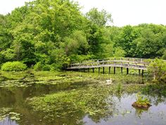 I grew up here, Teatown Lake Reservation. (Wildflower Island).