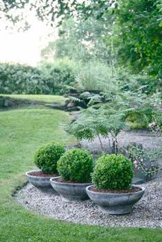 Trädgårdsflow: Buxbomledsen