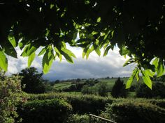 Heavy rain yesterday but with intermittent glimpses of the sun. Anthony J Sargeant took this photograph from under the horse Chestnut tree in the garden of his Shropshire home looking west down the valley of the River Corve. It was about pm on June 2016 Horse Chestnut, Rain Clouds, Natural Forms, Landscape Photographers, Sunshine, June, Horses, River, Garden