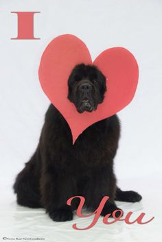 AWWWWW XD I love you too Newfie :3 ONE DAY I'LL HAVE YOU MY FRIEND! <3