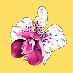 We're on an exploration of morphing flowers to create extraordinary hybrids! Here's a lovely hybrid illustrated orchid from one of our beautiful new designs. . . . #textiles #prints #textiledesign #design #inspiration #australiandesign #studio #lpdloves