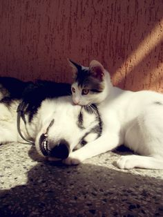 """Cat: """" you know u luv me"""" Dog: """" yeah yeah, whatever, just don't let the people see us like this"""""""