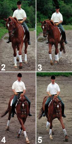 Here's How: Leg-Yield Your Horse | Practical Horseman