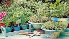 Lemon Diet, Natural Remedies, Herbalism, Home And Garden, Herbs, Flowers, Nature, Plants, Beauty