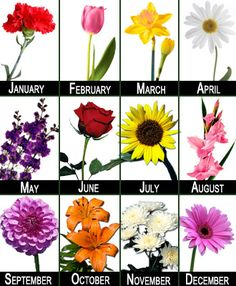 Birth month flowers- My favorite flowers for my birth month. I sure did get lucky Flower Club 12 Months - Florist in Richmond Virginia - Vogue Flowers September Birth Flower, June Flower, Birth Month Flowers, August Flowers, September Baby, April 13, Birth Flower Tattoos, Tattoo Flowers, Flower Meanings