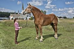 Big Jake, the tallest horse in the world - Imgur