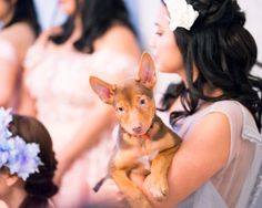 Tan puppy with cute floppy ears held by bridesmaid in blue Francis Libiran gown // Together with a real bride, groom and their bridal party of 13, TWS had the pleasure to hold our very first socially-conscious styled shoot with rescued puppies and dogs from two animal welfare charities Causes for Animals - Singapore and Exclusively Mongrels Limited! It was a Sunday well spent and we wouldn't have been able to do it without our amazing vendors, who all contributed their time and effort for…