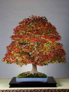 Bonsai autumn