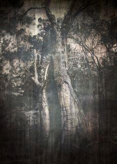 Майкл Джу. «Барьерный остров» Майкл Джу исследует воздействие и взаимовлияние явлений природы и вмешательства человека в естественный ландшафт, то, как эти силы формируют культуры и идентичности. Работы для выставки вдохновлены побережьем штата Джорджия, в частности островом-заповедником Сапело.