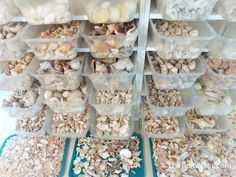Somewhat organized sea shells in containers