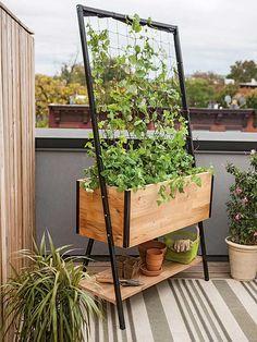 Urban Gardening Picks for Your City Terrace