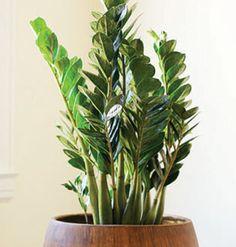 Hard-to-kill house plants