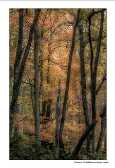 ✯ Autumn Colors in the Ardennes