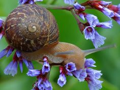 I think snails are fantastic.
