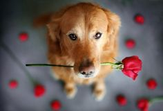Bringing you Valentine's Puppy LOVE!