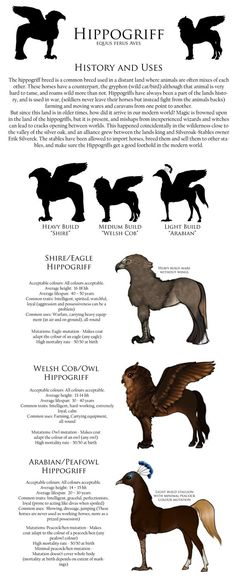 Hippogriff breed sheet by SilverOakStables