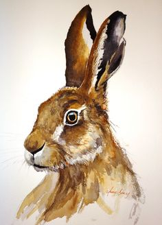 Hare watercolour. Sold