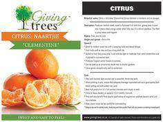 Citrus Tree Production