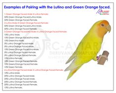 Examples of Pairing with the Lutino and Green Orange faced.