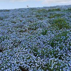 Flower Paradise Park Hitachi