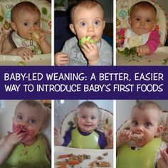 Baby Led Weaning-studying this big time! I have ALWAYS made my kids food. Now I am thinking of exploring more! Eeeek!