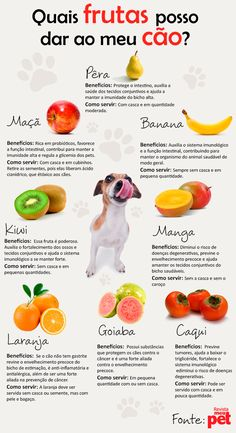 Frutas para cães/fruit for dogs Baby Dogs, Pet Dogs, Dogs And Puppies, Dog Cat, Love Pet, I Love Dogs, Shih Tzu, West Terrier, Pet Care