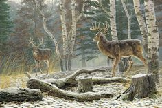 high resolution wallpapers widescreen deer by Araminta Peacock Wildlife Paintings, Wildlife Art, Deer Paintings, Deer Art, Moose Art, Horses In Snow, Whitetail Hunting, Whitetail Bucks, Deer Drawing