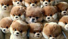 17 besten hunde bilder auf pinterest cute dogs cute puppies und fluffy animals. Black Bedroom Furniture Sets. Home Design Ideas